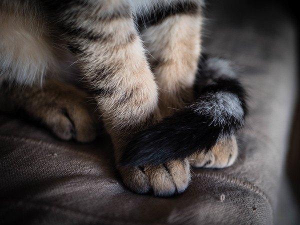 しっぽで手を隠す猫