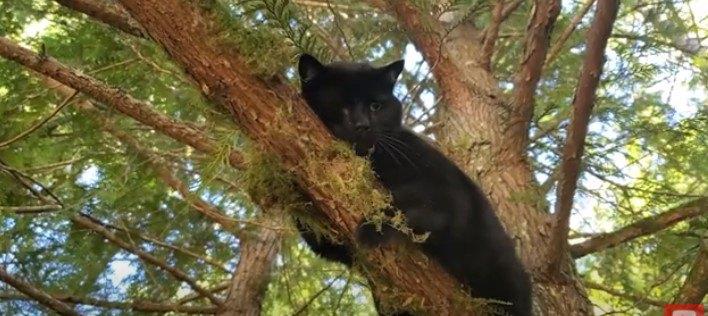 コヨーテに追われた猫