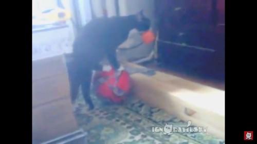 再びボールに乗ろうとする猫
