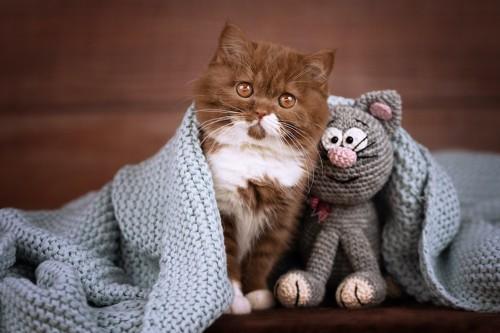 ブランケットをかけた猫とあみぐるみ