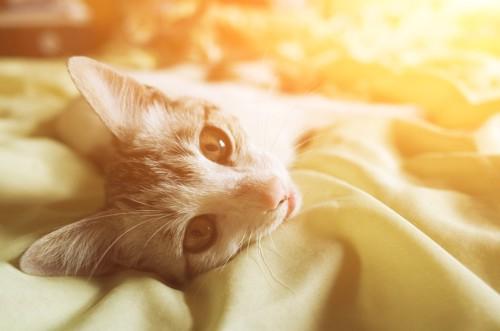 眠りながらこちらを見る猫
