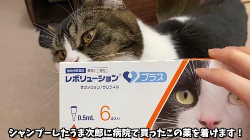 薬の箱と猫
