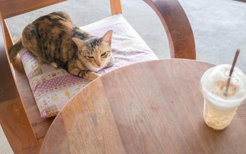 椅子の上のクッションでまどろむ猫