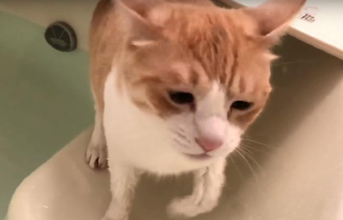 お湯から出てきた猫