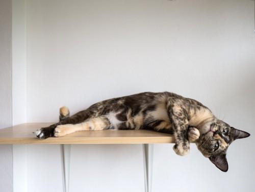 キャットウォークで横になっている猫