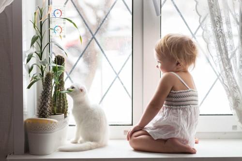 赤ちゃんと一緒に窓辺に座る白いスコティッシュフォールド