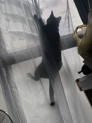 筋トレする猫ちゃん
