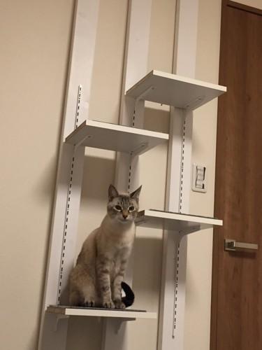 猫が実際にのぼっている図