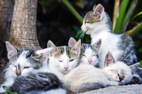 野良猫の子猫たち