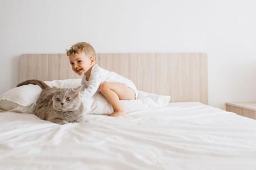 グレーの猫と赤ちゃん