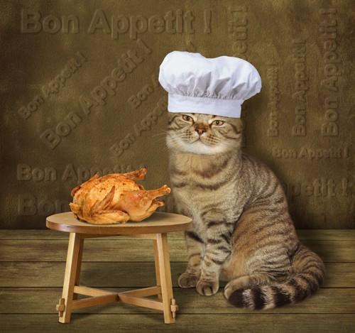 チキンを焼く猫