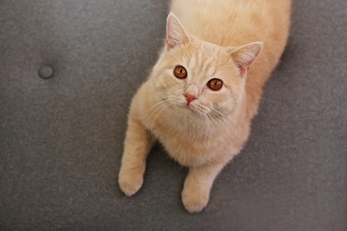 呼ばれて反応する猫