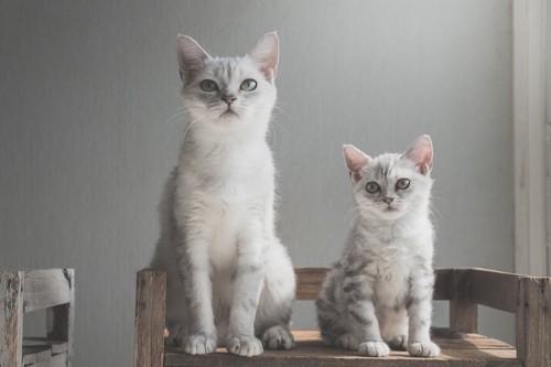 並んで座る成猫と子猫
