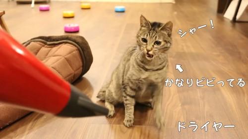 ドライヤーに威嚇する猫
