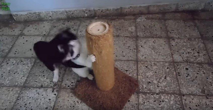 キャットタワーににしがみつく猫にしがみつく猫