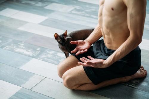 運動する男性と猫