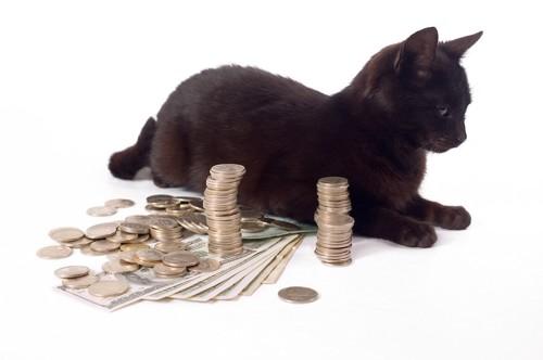 お金の隣で休む黒猫