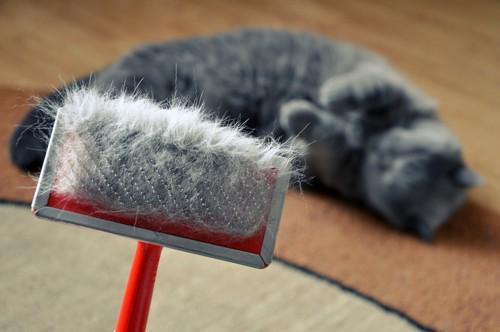 猫と毛のついたブラシ
