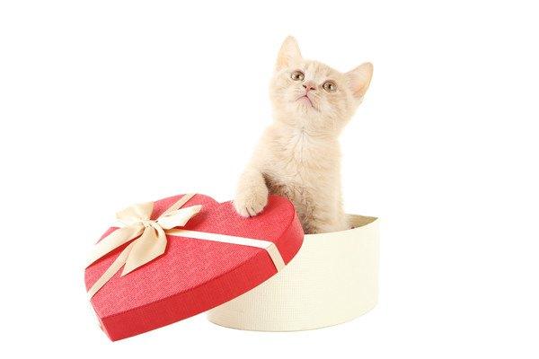 ハートのプレゼント箱から子猫