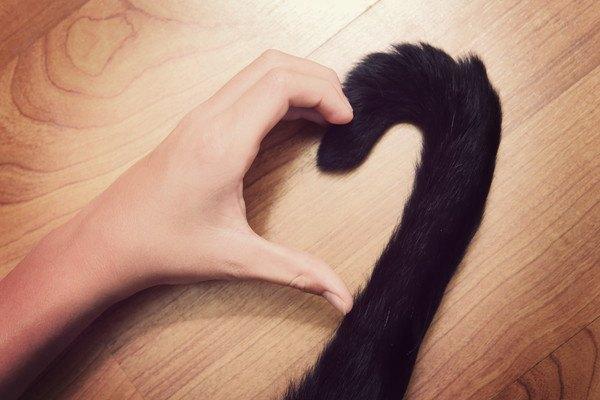 人の手と猫の尻尾でハート