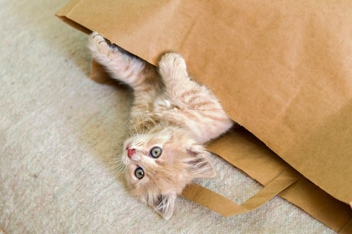 紙袋に入って遊ぶ子猫
