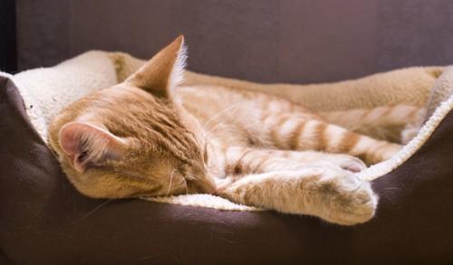 柔らかい場所で寝る猫