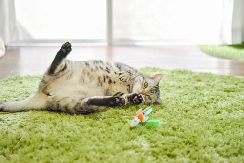 寝転んで遊ぶ猫