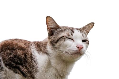 ゆっくりまばたきをする猫