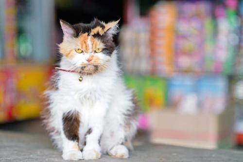 怒ったような表情で座る猫
