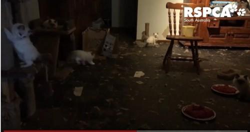 汚い部屋と無造作に置かれた餌