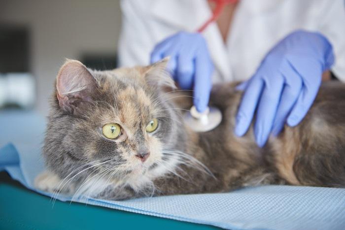 医師に診察を受ける猫