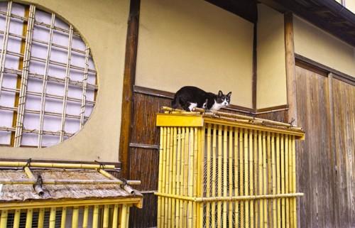 和風なお家にいる猫