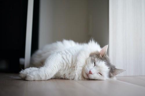 横になって眠っている猫