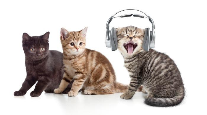 ヘッドフォンをしている猫