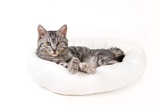 ベッドに寝る猫