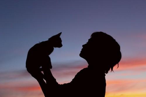 猫を持ち上げる人のシルエット
