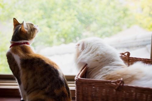 二匹の猫の後ろ姿