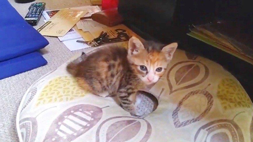 子猫の里親募集動画