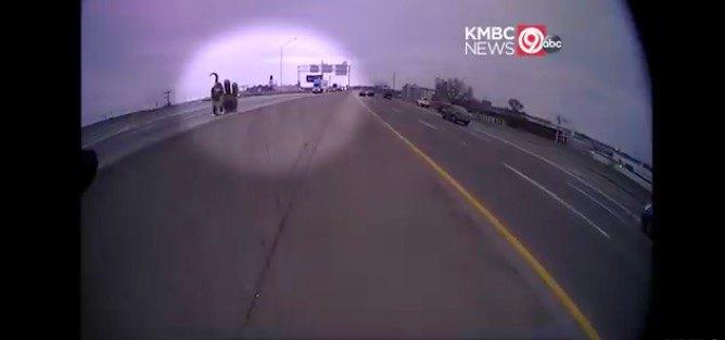 高速道路に猫
