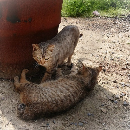 二匹の猫が寝ている写真