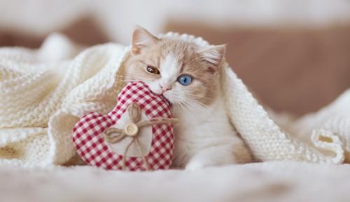 ハートのおもちゃを噛む子猫