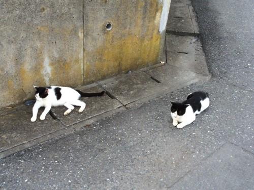 二斗田港近くにいた猫