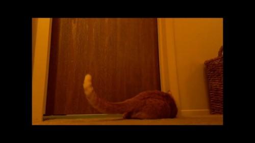ドアの前に寝そべる猫