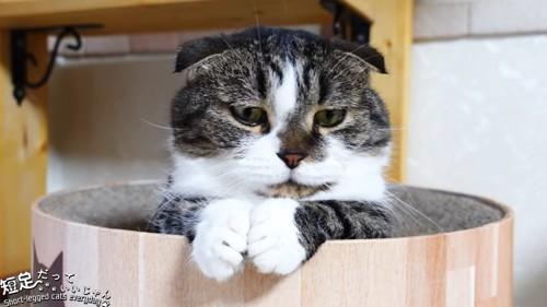 前足を合わせる猫