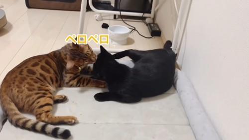 毛づくろいをする2匹の猫