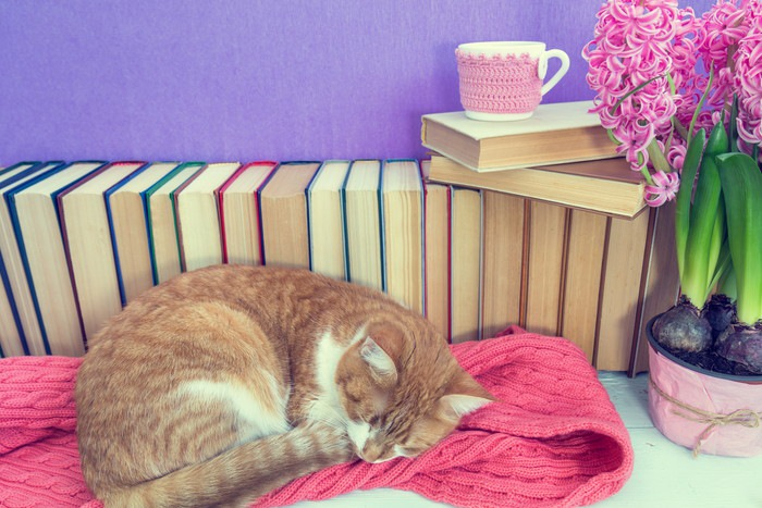 本と茶白猫