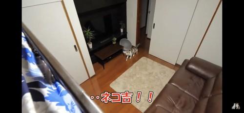 部屋に入ってくる猫