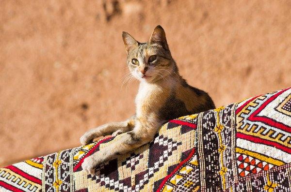 エジプトの布と猫