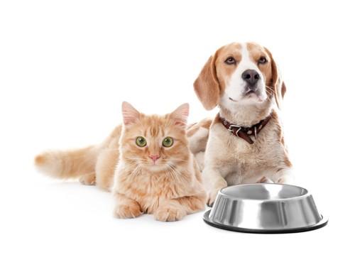 食器を前に座る猫と犬