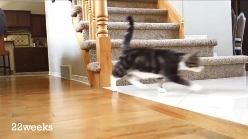 22周目の猫